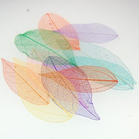 Picture of Skeleton Leaves (5) per pack