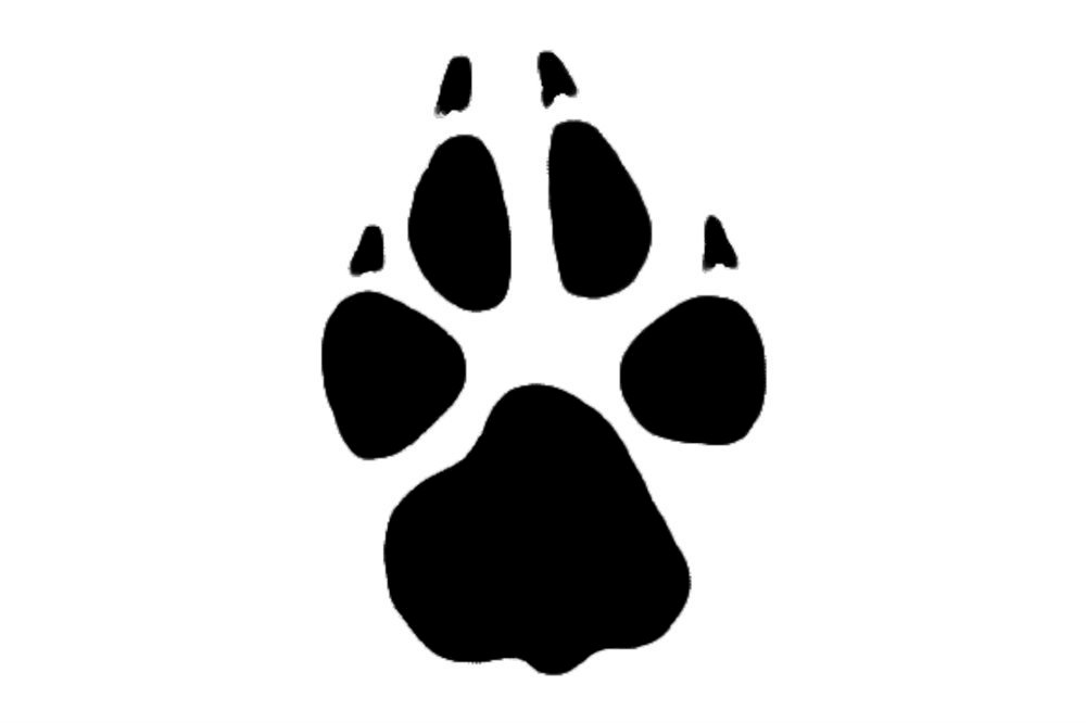 Paw Print Symbol Stamps Metal Clay Discount Supply