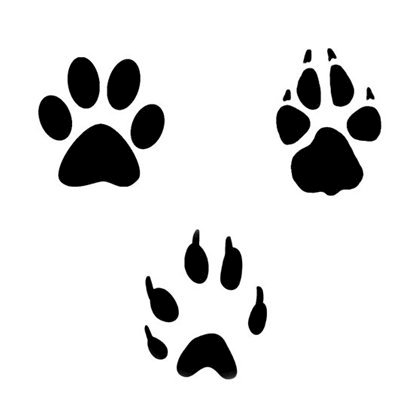 Picture of Paw Print Symbol Stamps